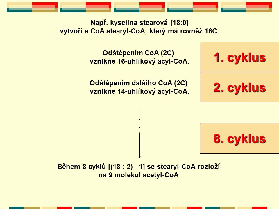 1. cyklus 2. cyklus 8. cyklus Např. kyselina stearová [18:0]